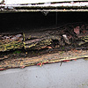 roofing rot.
